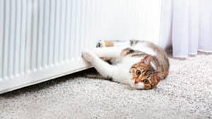 Katze Heizung warm