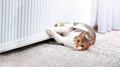 gemütliches Zuhause: Katze an wohlig warmer Heizung