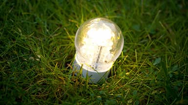 Eine Glühbirne im Gras